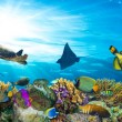 Colorful coral reef with many fishes and sea turtl...