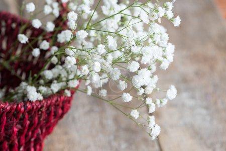 Photo for Gypsophila flowers on background,close up - Royalty Free Image