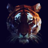 Low poly tiger illustration