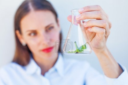 woman watching pest in a bulb