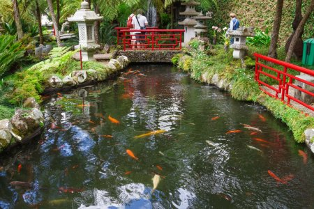 Lake with Koi fish in Tropical Garden Monte Palace. Funchal, Madeira, Portugal