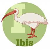 ABC Cartoon Ibis