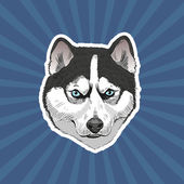 Husk dog hand drawn vector illustration