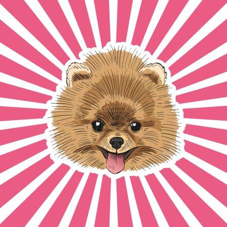 Spitz dog hand drawn, vector illustration