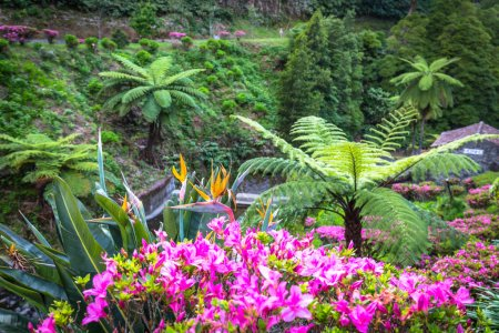 Garden on Sao Miguel island, Azores. It is located...