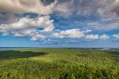 Top view of coniferous forest on the Baltic Sea coast, Poland