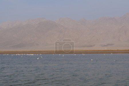 Salt lake with birds near Eilat