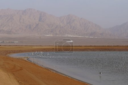 Salt lakes with birds