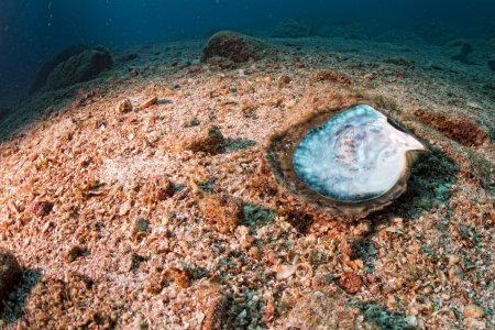 Mother of pearls in a reef colorful underwater landscape