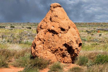 Giant termitary termites nest in Australia