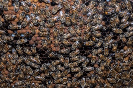 Bees inside beehive while making honey detail...