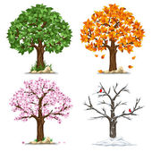 Tree in four seasons - spring summer autumn winter Vector illustration Isolated on white background