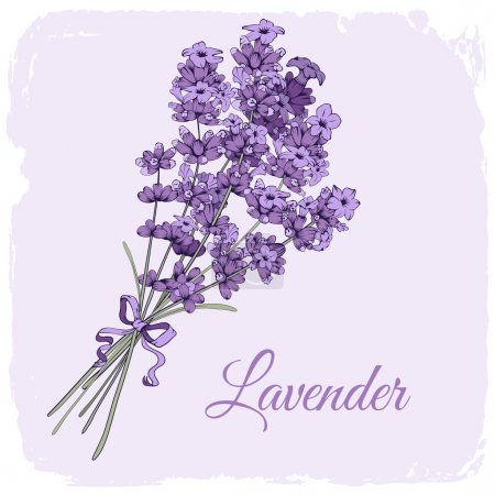 Illustration for Vintage background with hand drawn floral elements in engraving style - fragrant lavender bouquet. Vector illustration. - Royalty Free Image