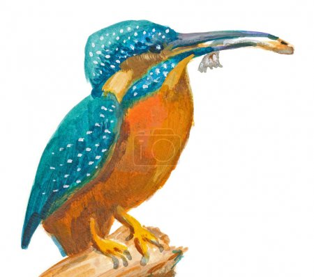 An hand painted illustration on white - Bird, Common kingfisher