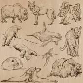 Animals around the World (part 22) Hand drawn vector pack