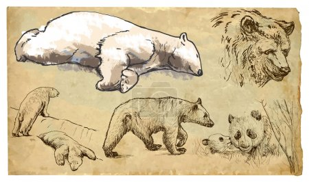 Illustration for BEARS (Ursidae family). Collection of an hand drawn illustrations (originals, no tracing). Drawings are editable in layers and groups. The color layers are separated. - Royalty Free Image