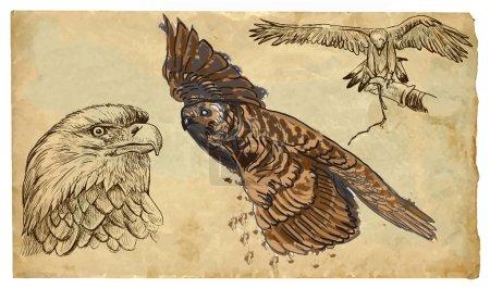Animals, theme: BIRDS OF PREY - hand drawn vector pack
