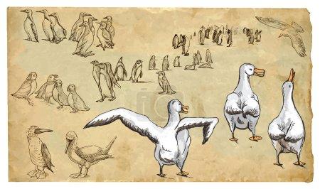 Illustration pour OISEAUX D'EAU (et de mer). Collection d'illustrations dessinées à la main (originaux, sans tracé). Les dessins sont modifiables en couches et en groupes. Les couches de couleur sont séparées . - image libre de droit