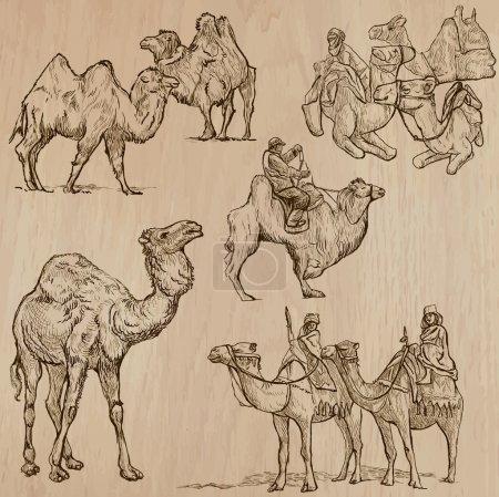 Illustration pour CAMELS (set no 2) - Collection d'illustrations vectorielles dessinées à la main. Chaque dessin comprend quelques couches de lignes, le fond coloré est isolé. Facile à modifier . - image libre de droit