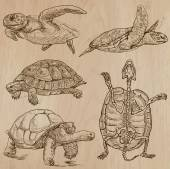 TURTLES (pack no1) - Collection of an hand drawn vector illustrations Each drawing comprise a few layers of lines the colored background is isolated Easy editable (Name of species contained)