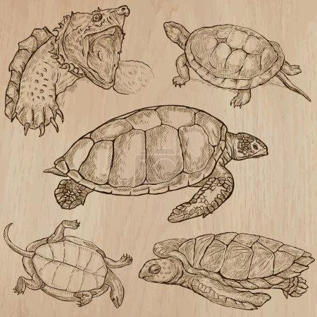 Photo pour TURTLES (pack no 2) - Collection d'illustrations vectorielles dessinées à la main. Chaque dessin comprend quelques couches de lignes, le fond coloré est isolé. Facile à modifier. (Nom des espèces contenues .) - image libre de droit
