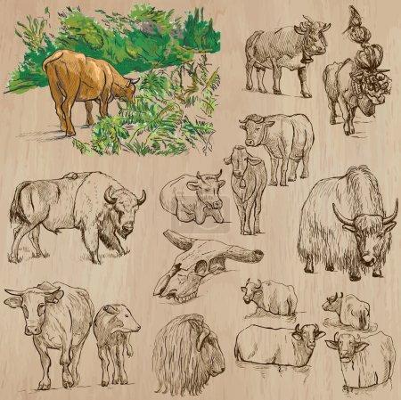 Illustration pour Animals around the World - COWS and CATTLE - Collection d'illustrations vectorielles dessinées à la main. Chaque dessin comprend quelques couches de lignes, le fond coloré est isolé. Facile à modifier . - image libre de droit