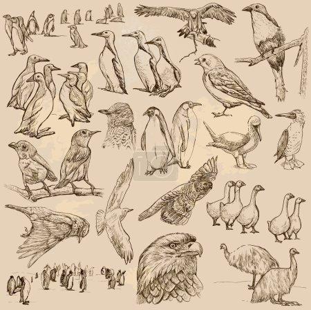 Illustration pour Une collection dessinée à la main, OISEAUX - Vecteurs, croquis à main levée. Modifiable en couches et groupes. Le contexte est isolé. Tous les oiseaux sont nommés à l'intérieur du pack vectoriel . - image libre de droit