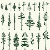 Set of stylized pine silhouettes Vector illustration