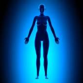 Vollen weiblichen Körper - Front View - blau-Konzept