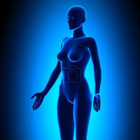 Full Female Body - Isometric View - Blue concept