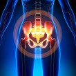 Female Anatomy Medical Imaging by decade3d...