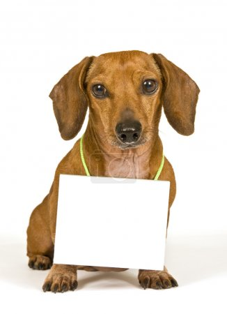 Cute Adorable Dog With A Blank Sign