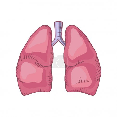Lungs detailed illustration