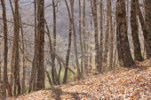 Autumn landscape with beech forest without leaves in Spain