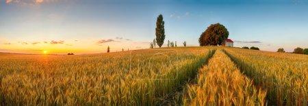 Photo pour Champ de blé d'été panorama campagne, Agriculture - image libre de droit