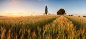 Sunset over wheat field with path and chapel in Slovakia - panor