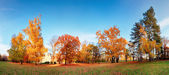 Autumn forest panorama in park