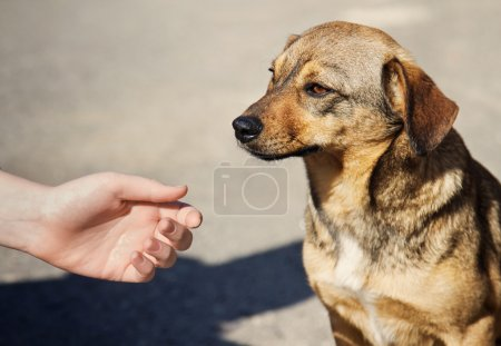 Child hand and lonely homeless dog