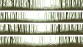 Horizontal banners forest with trunks and clearing in woods