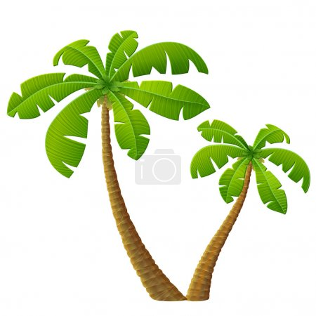 Tropical palm tree with leaves
