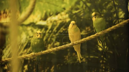 wild parrots sitting on rope with blurred foreground