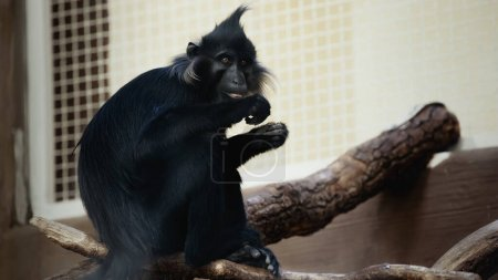 black monkey sitting on wooden branch in cage