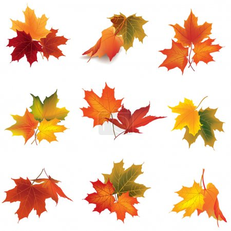 Illustration for Autumn icon set. Fall leaves and berries. Nature symbol collection isolated on white background. - Royalty Free Image
