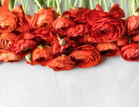 Top view of fresh red persian buttercup flowers ly...