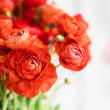 Front view of bouquet of fresh red persian butterc...
