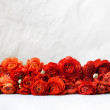 Fresh red persian buttercup flowers lying on light...