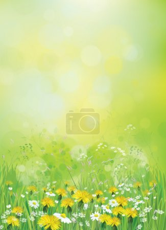 Illustration for Vector nature background with chamomiles and dandelions - Royalty Free Image