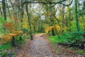 Autumn Woodland Path
