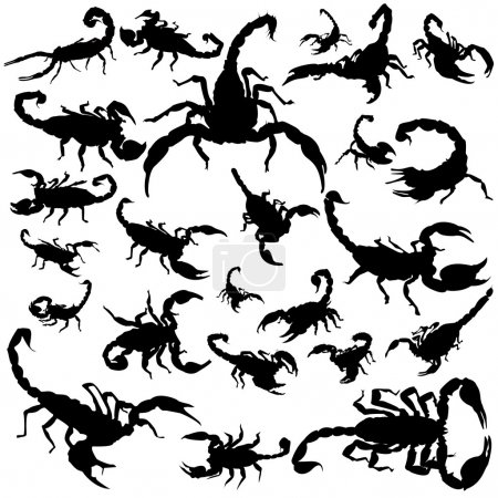 Illustration for Black scorpion silhouettes on white background - Royalty Free Image