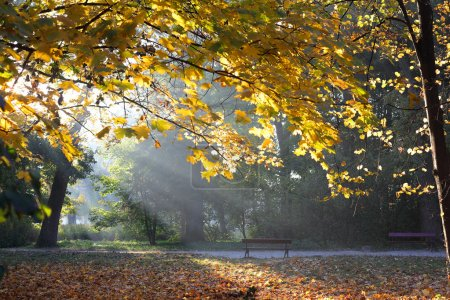 Photo for Autumn nature in the morning, landscape - Royalty Free Image